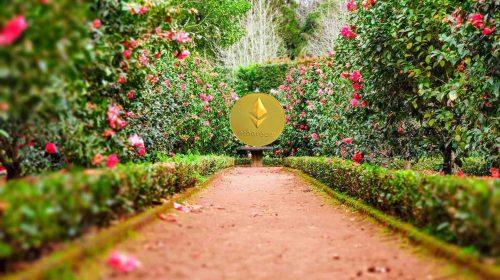 ethereum jardín