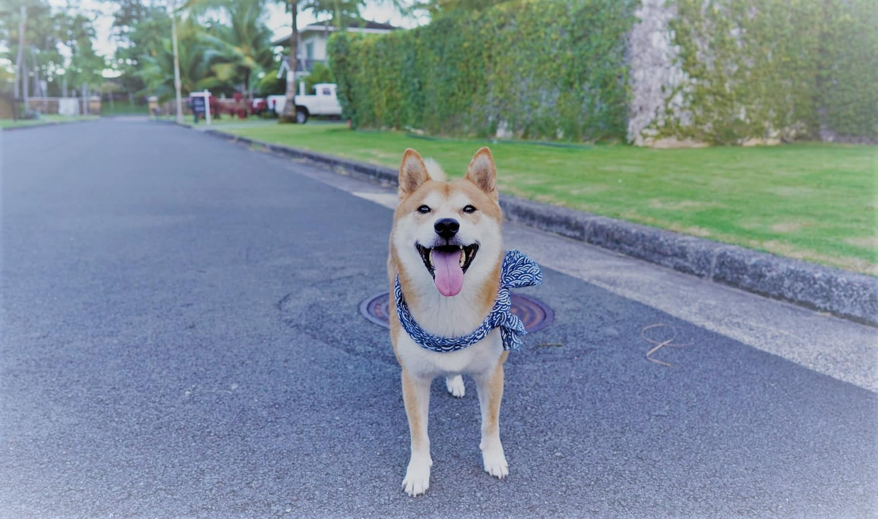 doge-unsplash