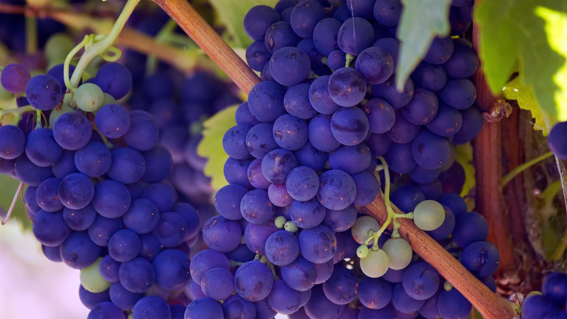 grape-uva-unsplash