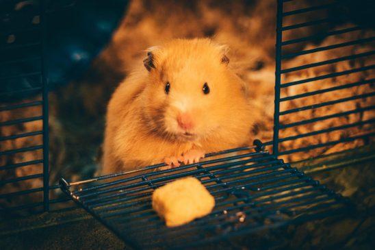 hamster-unsplash