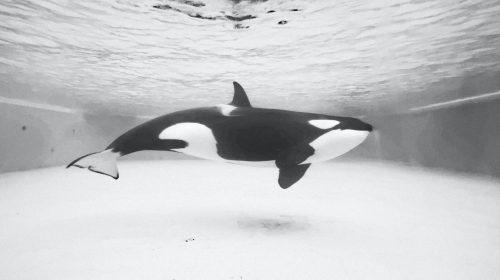 orca-unsplash